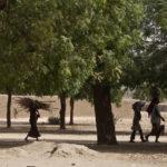 CPF calls for a halt to deforestation