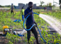 Agricultural Transformation in Ghana: An insight into the NPP and NDC past performance, future perspective, and policy options.