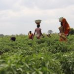 The Ghana Association of Farm Producers has disclosed that access to credit has become a major challenge for its members. According to the Association, the challenge