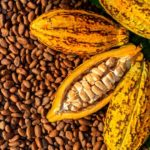 Ghana, Cote d'Ivoire produce 60% of global cocoa