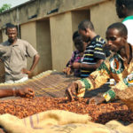 Top Cocoa Producers Push for Premium for Farmers