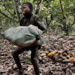 Child labour in agriculture on the rise, FAO warns